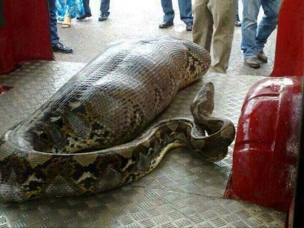 snakethatateamanmeme